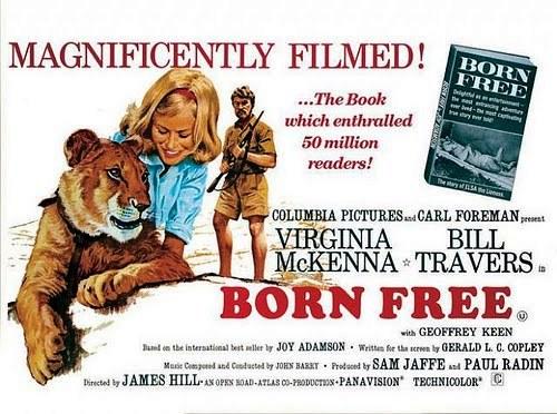 poster Born Free (1966)