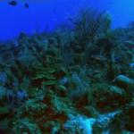 Caraibele Salbatice Recifuri si epave